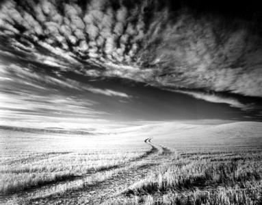 silver gelatin print - wheatfield