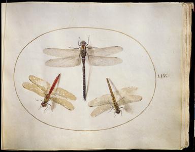 Animalia Rationalia et Insecta (Ignis):  Plate LIV