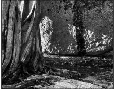 Juniper Tree and Rock