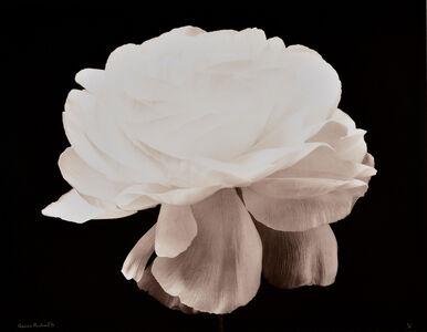Gardenia, Fond Noir