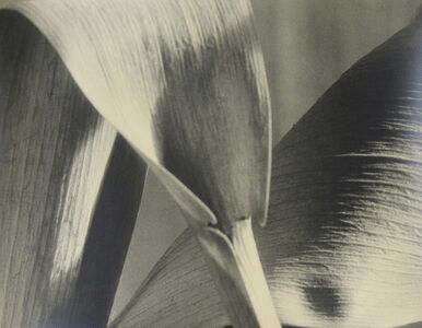 Untitled (detail of leaves)