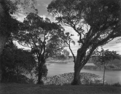 Paisagem com Árvores e Lago