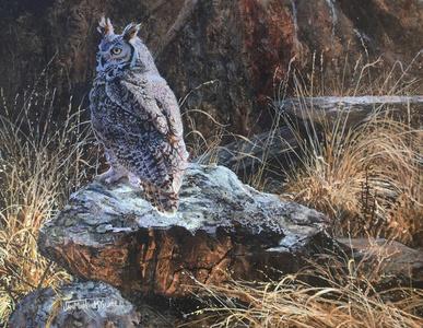 Resting Rock -  Horned owl