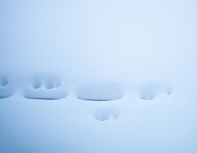 Snow, Bridgehampton
