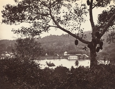 A Peep from Upper Lake Road showing Temple and Island with Park -- fruit tree in foreground