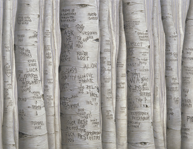 Aspen Trees (You're Lost)