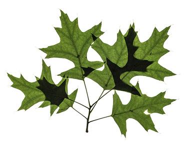 untitled, leaves