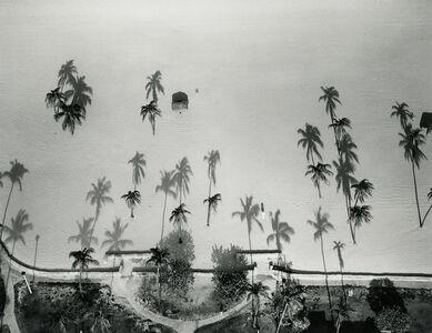 Palm Trees, Miami, Florida