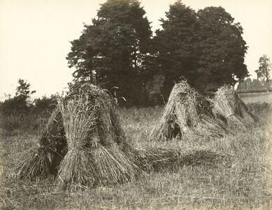 Harvest scene with stooks and trees