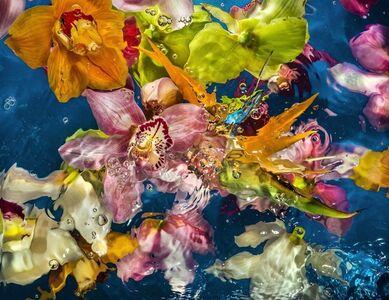 Aqua Flora no.001