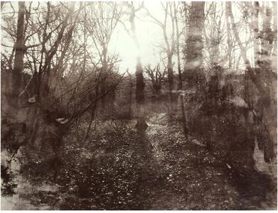 Queens Wood 1.10