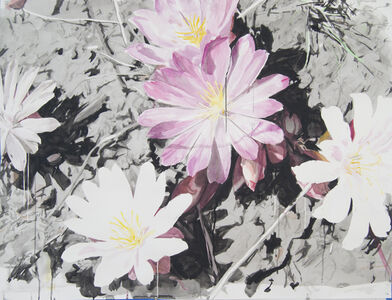 Pink and White Lewisias with Silhouettes