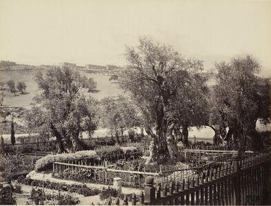 The Garden of Gethsemane [Jerusalem]