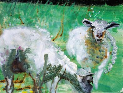 Schaafe (Sheep), Sylt