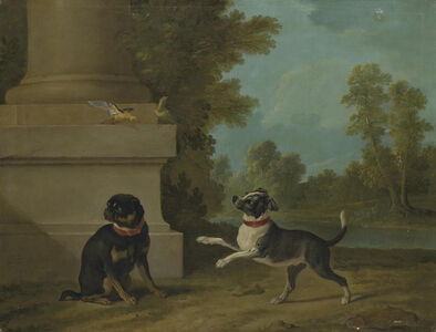 Dogs playing with birds in a park
