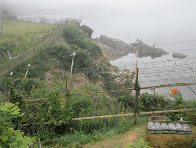 Seagull migration across mine field near Sabajawi Rock, north shore of Baengnyeongdo