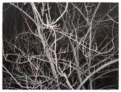 Look at this Grey Tree #12