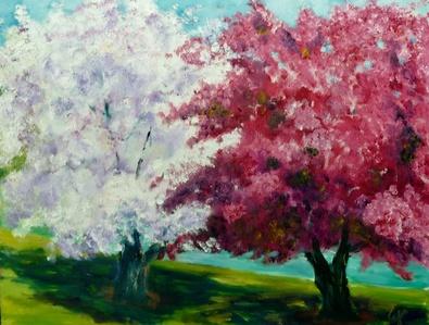 Cherry Blossoms, Boston