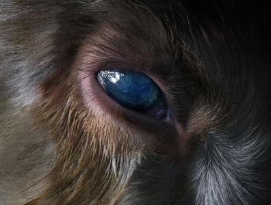 Presence (Eye)