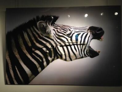 Screaming Zebras