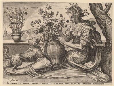 Odoratus