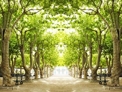 Trees III, St. Tropez