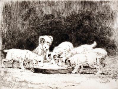C1927 Sealyham Puppies