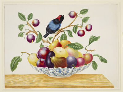 Still life with fruit and Blue-Backed Manakin