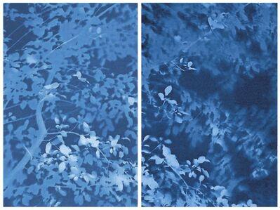 Arbor 8-10-14 — Nos. 3 & 4 (Buckthorn)