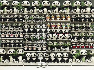 Hiding in the City - Panda