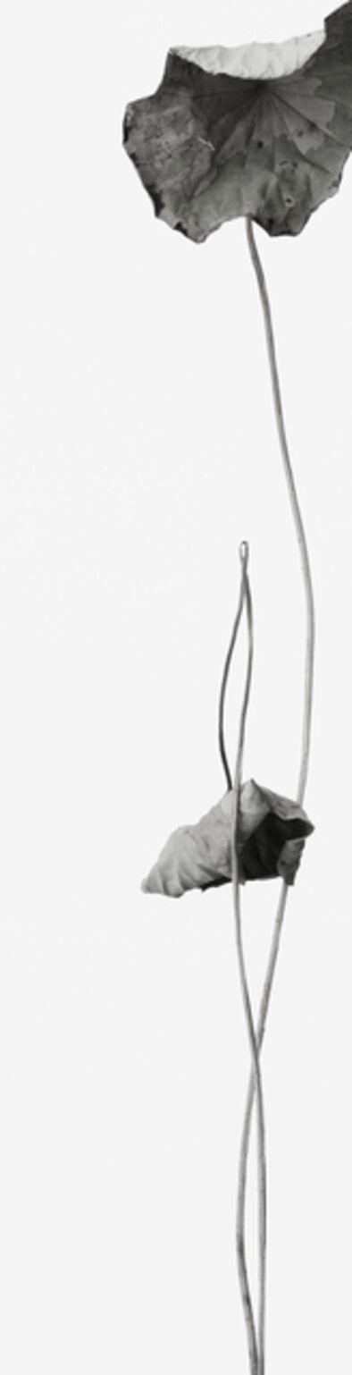Takashi Tomo-oka, 'Dead Lotus 2', 2014