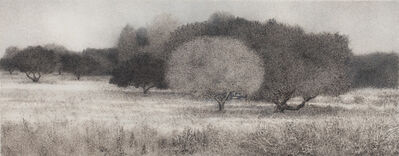 George Tzannes, 'Olive Grove', 2010