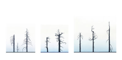 Greg Rose, 'Eight Burnt Trees, Crystal Lake', 2012