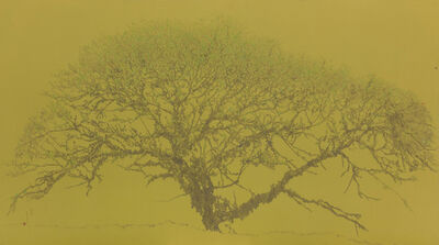Li Wei 李威, 'Tree in the Mountains No.1 山中木 No.1', 2014