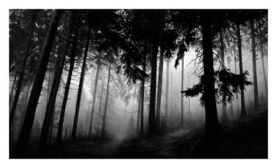 Robert Longo, 'Untitled (Fairmont Forest)', 2014