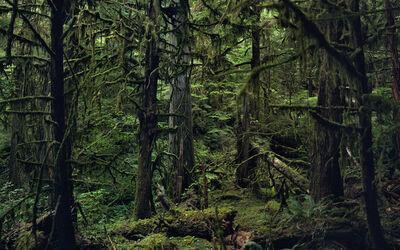 Jason Frank Rothenberg, 'Quinault (Interior #1), AP', 2014
