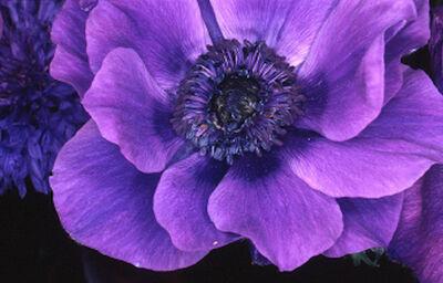 Nobuyoshi Araki, 'Flower Rondeau, 1997'