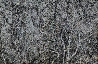 Mangu Putra, 'Wilderness', 2015