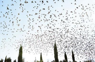 Rachel Cobb, 'Birds in Mistral 2/5'