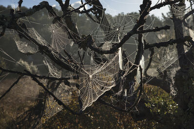 Rachel Cobb, 'Spider Webs in Wind 2/10'