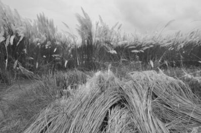 "Mohan Lal Majumder, 'Kans Grass Shantiniketan, Black and White Photography, Indian Artist"" In Stock""', 2010"