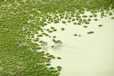Zack Seckler, 'Botswana Bath', 2009