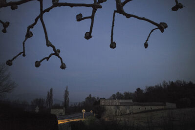 Rachel Cobb, 'Pruned Trees 2/10'