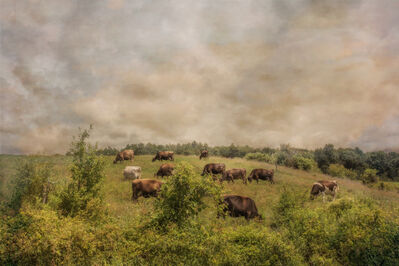 Jerry Freedner, 'Cattle Grazing', 2018