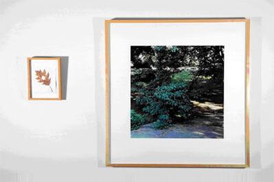 Andy Goldsworthy, 'Oak Tree Hole, New York', 1993