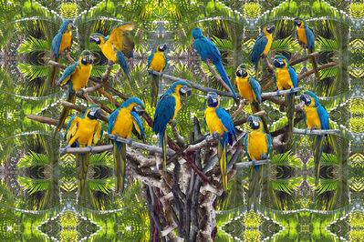 KASHA McKee, 'The Parrot Tree, Palm Beach Zoo', 2017