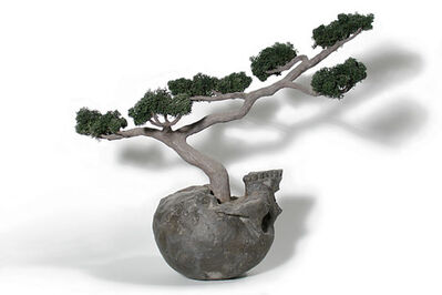 Jason Clay, 'Bonsai with Skull'