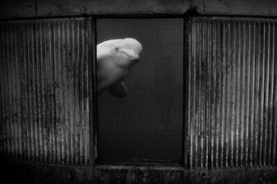Britta Jaschinski, 'Silent Whale', 1995