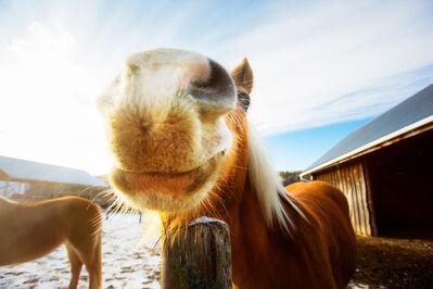 Shannon Greer, 'Smiling Horse', 2000-2018