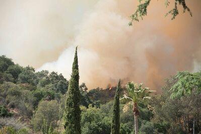 Robert Welkie, 'Trees in Front of Fire in Monrovia, California', 2016